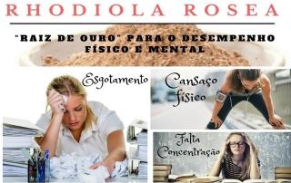 rhodiola_rosea_formula-basica